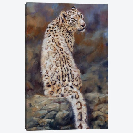 Snow Leopard  Canvas Print #STG163} by David Stribbling Canvas Artwork