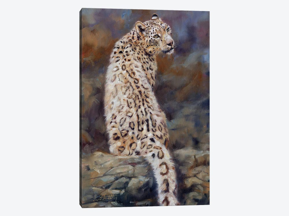 Snow Leopard  by David Stribbling 1-piece Canvas Art Print