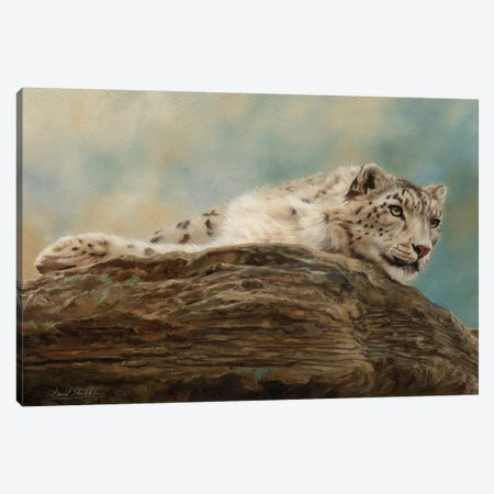 Snow Leopard Resting On A Rock 3-Piece Canvas #STG165} by David Stribbling Art Print