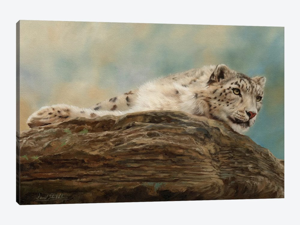 Snow Leopard Resting On A Rock by David Stribbling 1-piece Art Print