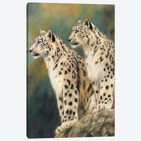 Snow Leopards On A Rock 3-Piece Canvas #STG166} by David Stribbling Art Print