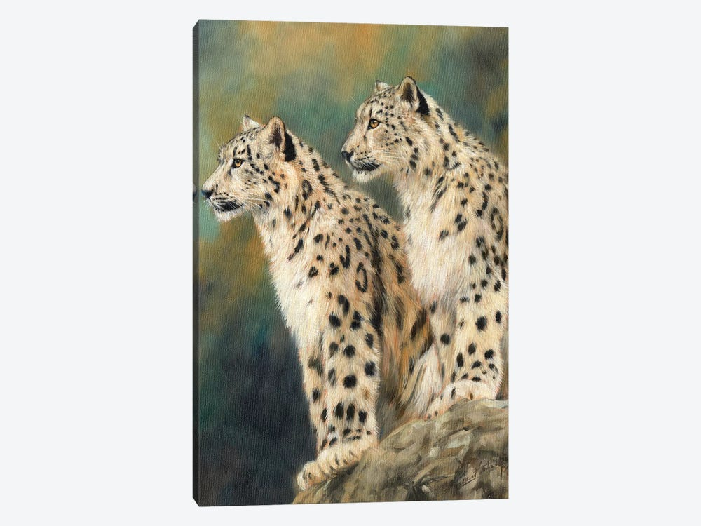 Snow Leopards On A Rock by David Stribbling 1-piece Canvas Artwork