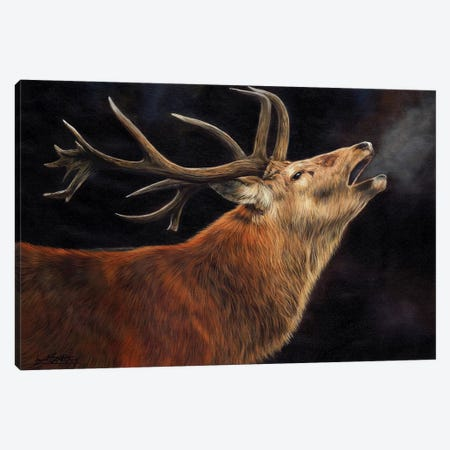 Stag Call Of The Wild Canvas Print #STG167} by David Stribbling Canvas Art Print