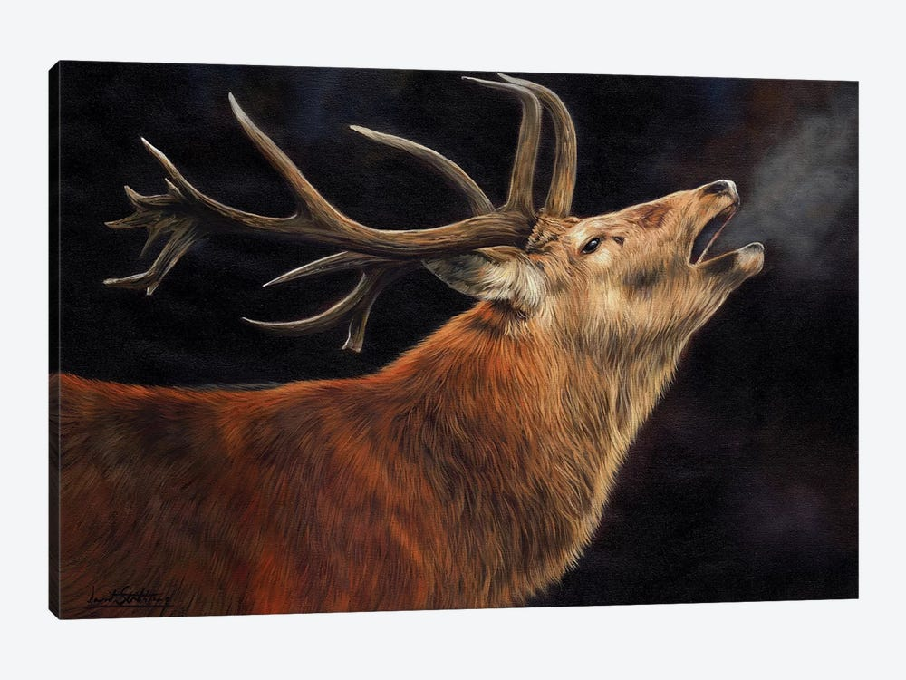 Stag Call Of The Wild by David Stribbling 1-piece Canvas Print