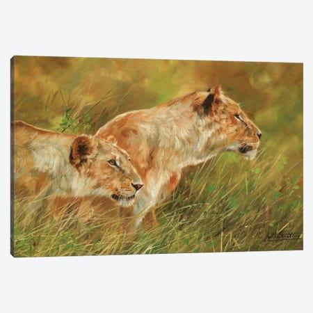 Stalking Lions Canvas Print #STG168} by David Stribbling Canvas Artwork
