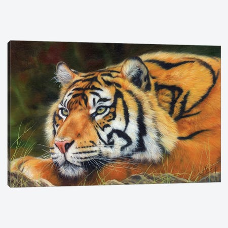 Sumatran Tiger Canvas Print #STG169} by David Stribbling Canvas Art