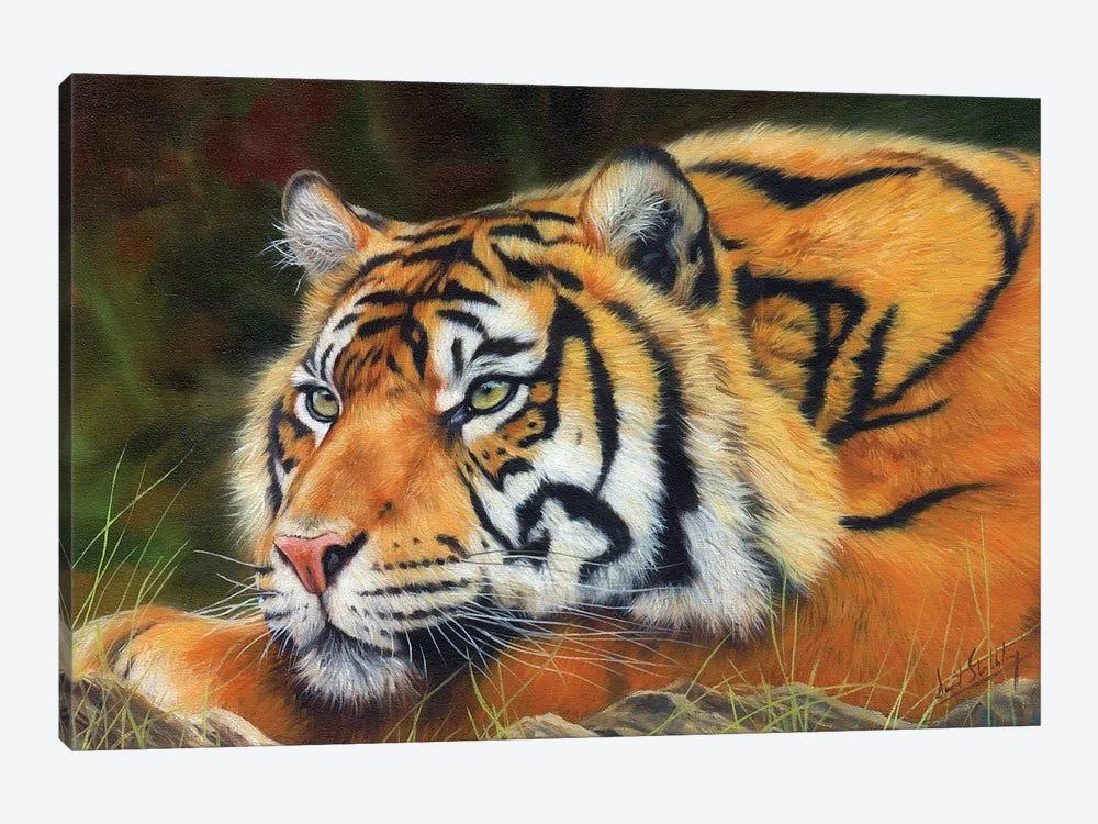 Sumatran Tiger by David Stribbling 1-piece Art Print