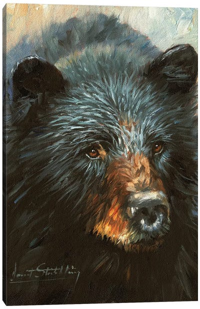 Black Bear by David Stribbling Canvas Art Print