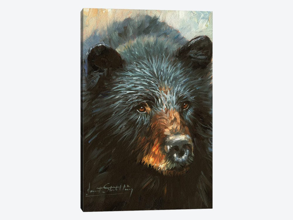Black Bear by David Stribbling 1-piece Canvas Artwork