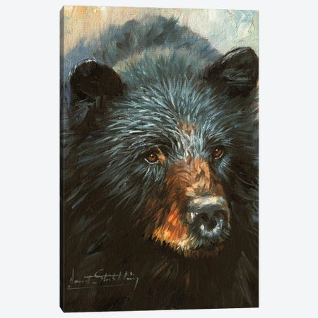 Black Bear Canvas Print #STG16} by David Stribbling Canvas Art
