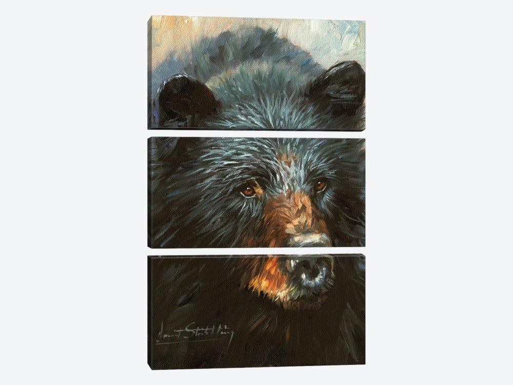 Black Bear by David Stribbling 3-piece Canvas Artwork