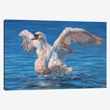 Swan Canvas Print #STG170} by David Stribbling Canvas Print
