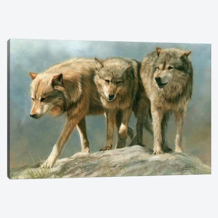 Three Of A Kind Grey Wolves Canvas Print #STG172} by David Stribbling Canvas Art Print