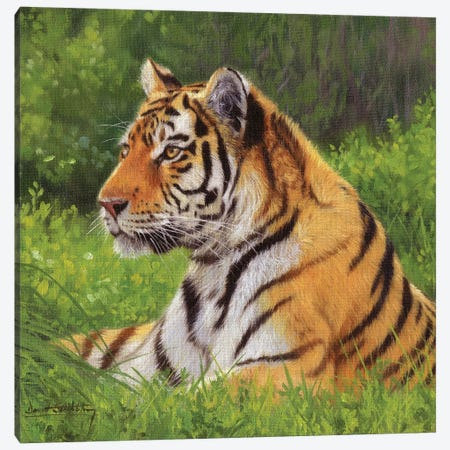 Tiger 3-Piece Canvas #STG173} by David Stribbling Art Print