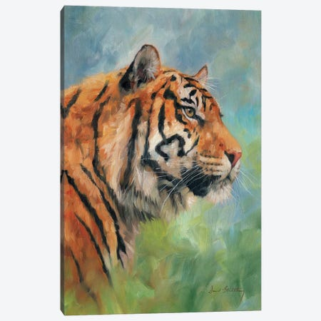 Tiger Study Canvas Print #STG175} by David Stribbling Canvas Art