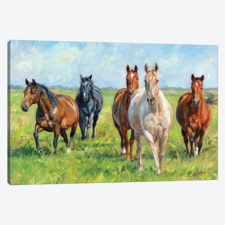 Wild Horses Canvas Print #STG177} by David Stribbling Canvas Wall Art