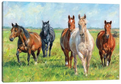 Wild Horses by David Stribbling Canvas Art Print