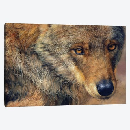 Wolf Stare 3-Piece Canvas #STG178} by David Stribbling Art Print
