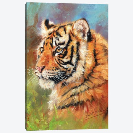 Young Amur Tiger Canvas Print #STG179} by David Stribbling Canvas Art Print