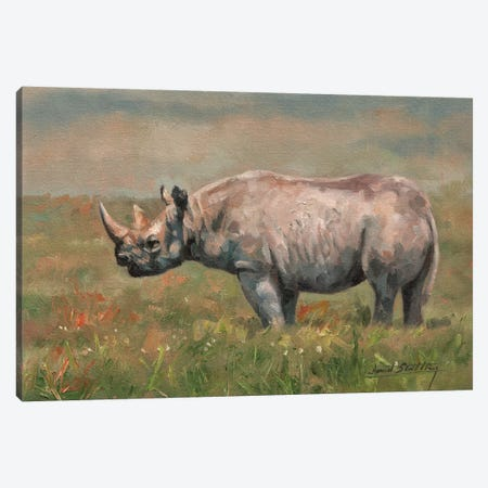 Black Rhino Canvas Print #STG17} by David Stribbling Canvas Wall Art