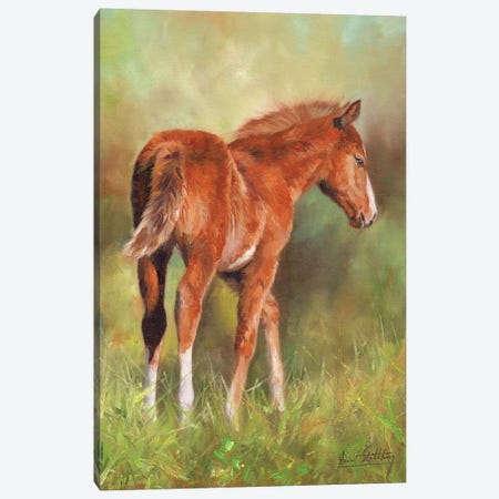 Young Foal Canvas Print #STG180} by David Stribbling Canvas Artwork