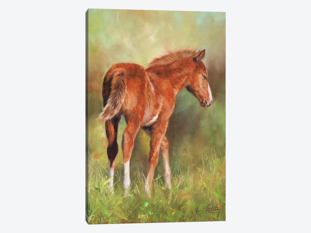 Young Foal by David Stribbling 1-piece Canvas Wall Art