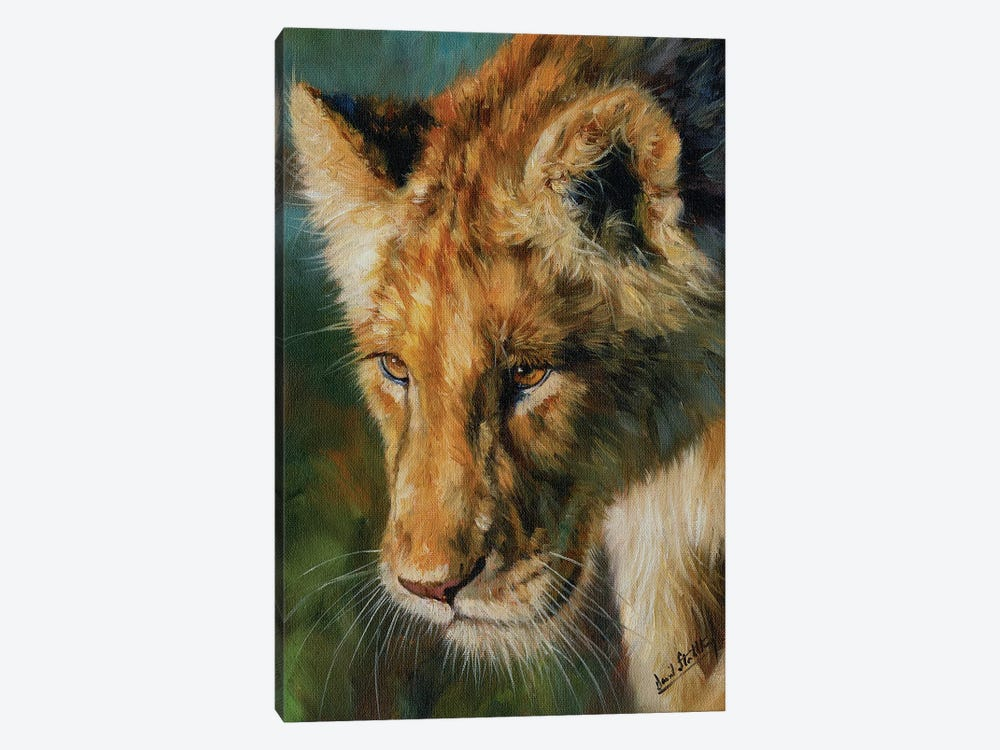 Young Lion by David Stribbling 1-piece Canvas Art Print