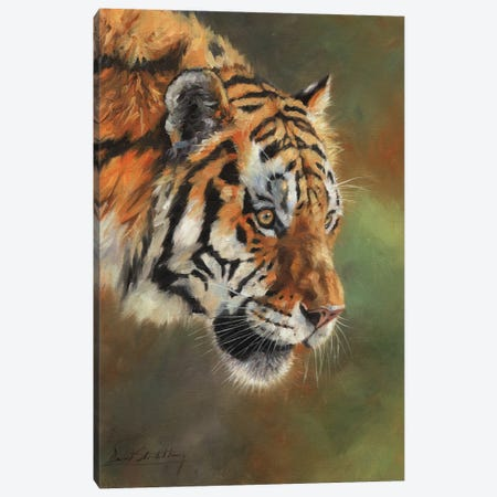 Amur Tiger Portrait II Canvas Print #STG184} by David Stribbling Canvas Print