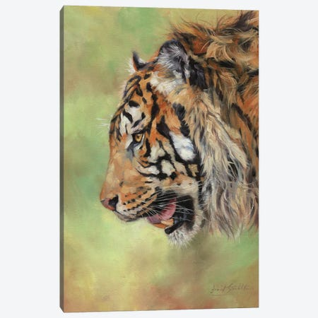 Amur Tiger Profile II Canvas Print #STG185} by David Stribbling Art Print