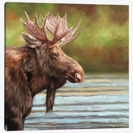 Bull Moose Canvas Print #STG187} by David Stribbling Canvas Print