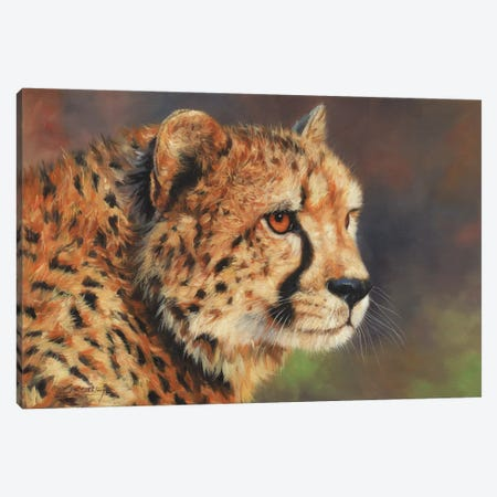 Cheetah Portrait II Canvas Print #STG188} by David Stribbling Canvas Artwork