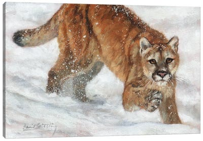 Cougar in Snow Canvas Art Print