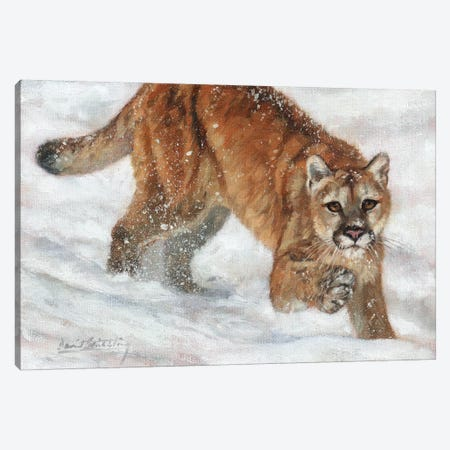 Cougar in Snow 3-Piece Canvas #STG189} by David Stribbling Canvas Art
