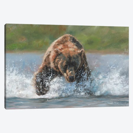 Brown Bear Grizzly Charge Canvas Print #STG18} by David Stribbling Canvas Art Print