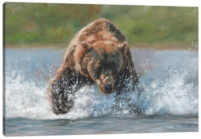 Brown Bear Grizzly Charge by David Stribbling Canvas Art Print