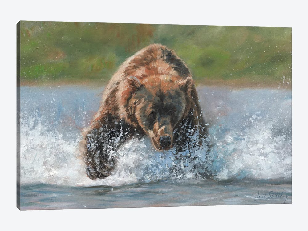 Brown Bear Grizzly Charge by David Stribbling 1-piece Canvas Artwork