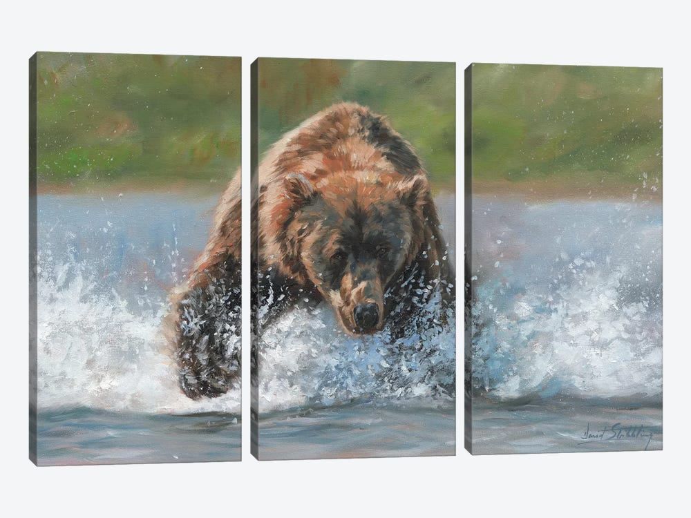Brown Bear Grizzly Charge by David Stribbling 3-piece Canvas Wall Art