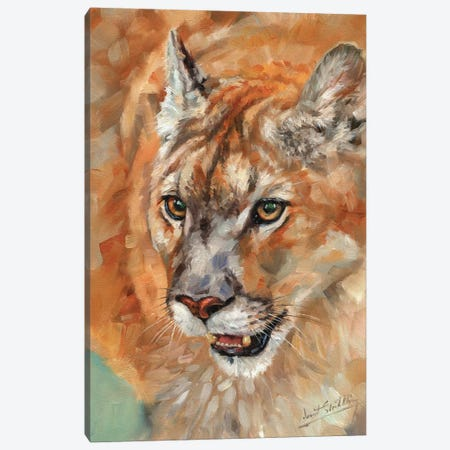 Cougar Portrait II Canvas Print #STG190} by David Stribbling Canvas Art Print