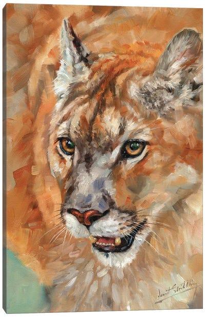 Cougar Portrait II Canvas Art Print