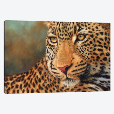 Leopard Portrait II Canvas Print #STG191} by David Stribbling Canvas Art Print
