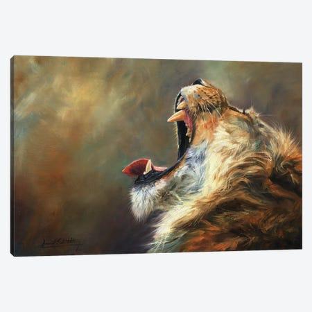 Lion Roar Canvas Print #STG192} by David Stribbling Canvas Art Print