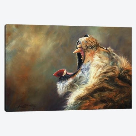 Lion Roar Canvas Print #STG192} by David Stribbling Canvas Art Print