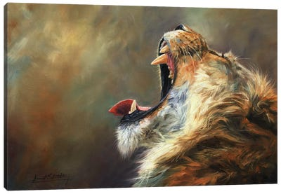 Lion Roar by David Stribbling Canvas Art Print