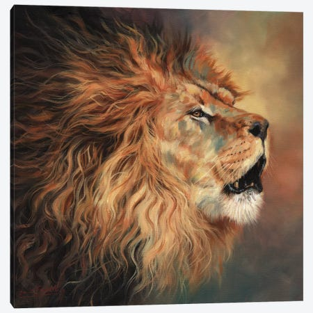 Lion Roar Profile Canvas Print #STG193} by David Stribbling Art Print