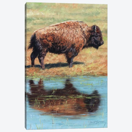 North American Bison Canvas Print #STG195} by David Stribbling Canvas Wall Art