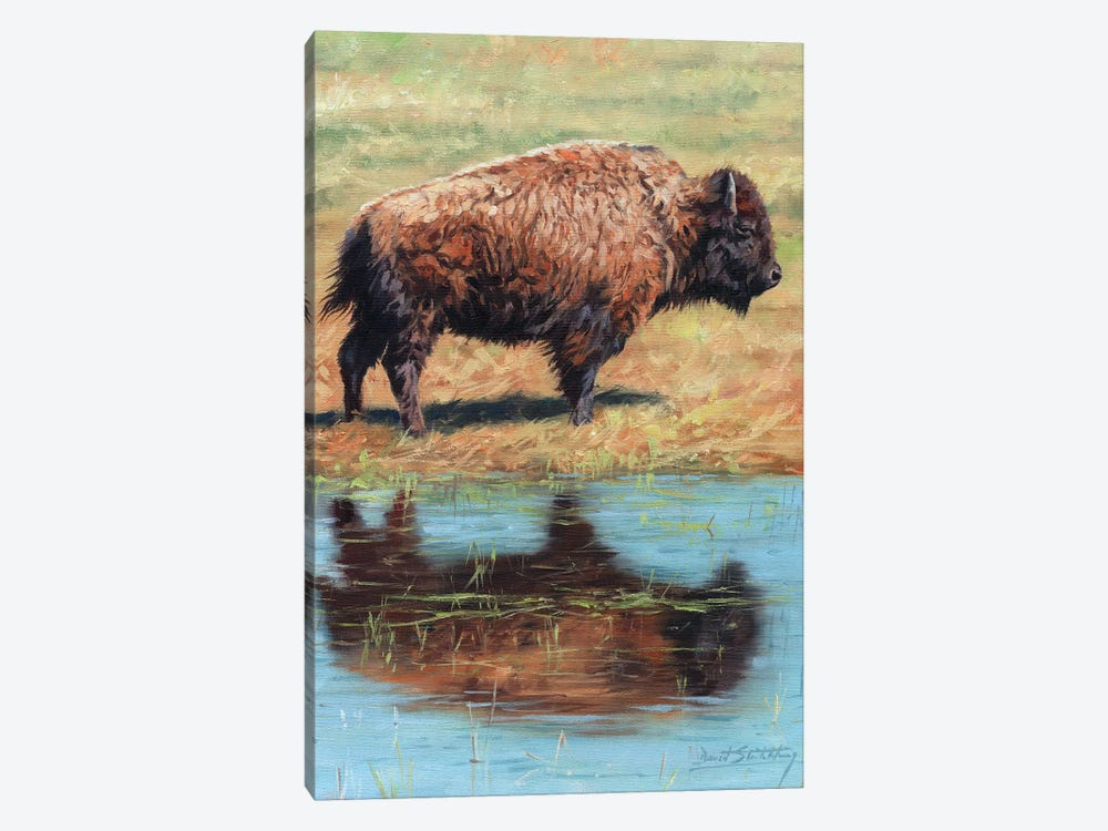 North American Bison by David Stribbling 1-piece Canvas Wall Art