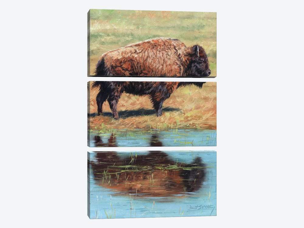 North American Bison by David Stribbling 3-piece Canvas Wall Art