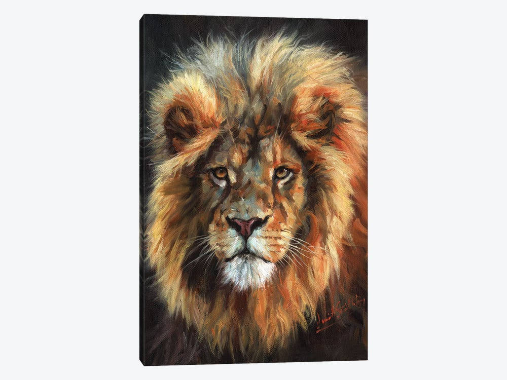 Portrait of a Lion by David Stribbling 1-piece Canvas Print