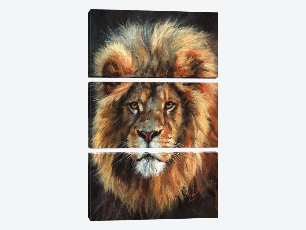 Portrait of a Lion by David Stribbling 3-piece Canvas Art Print