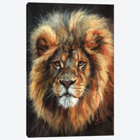 Portrait of a Lion Canvas Print #STG196} by David Stribbling Canvas Artwork